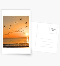 Seagulls in the Sunset Postcards
