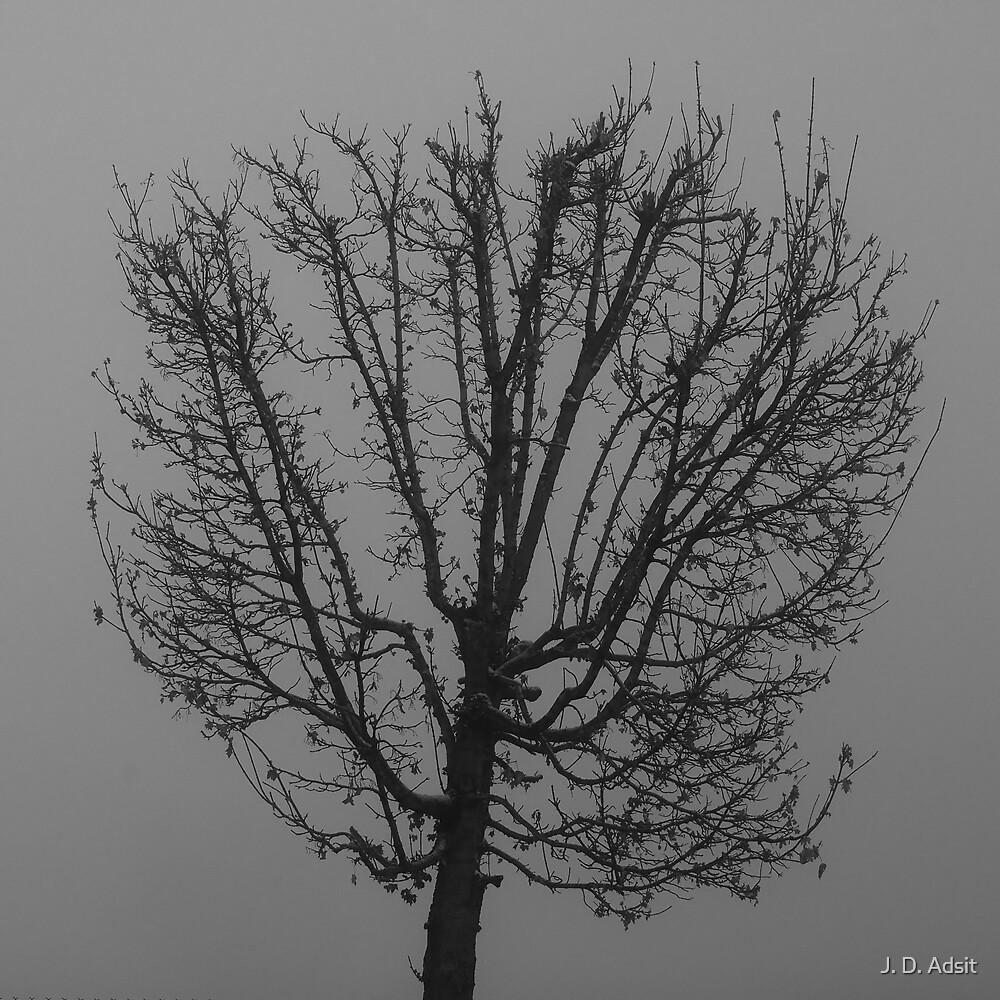 Fog Flower by J. D. Adsit