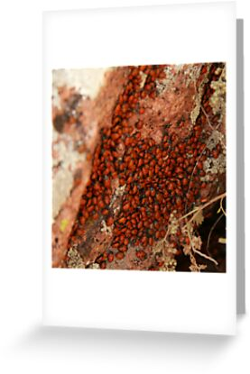 Lady Bugs Winter Roost by JamesMichael
