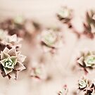 More succulents by evStyle