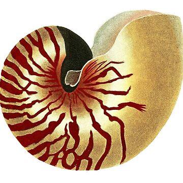 Gold Seashell by SandraWidner