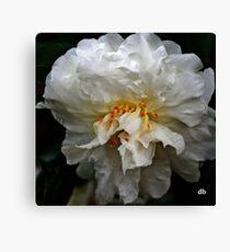white camellia_3 Canvas Print
