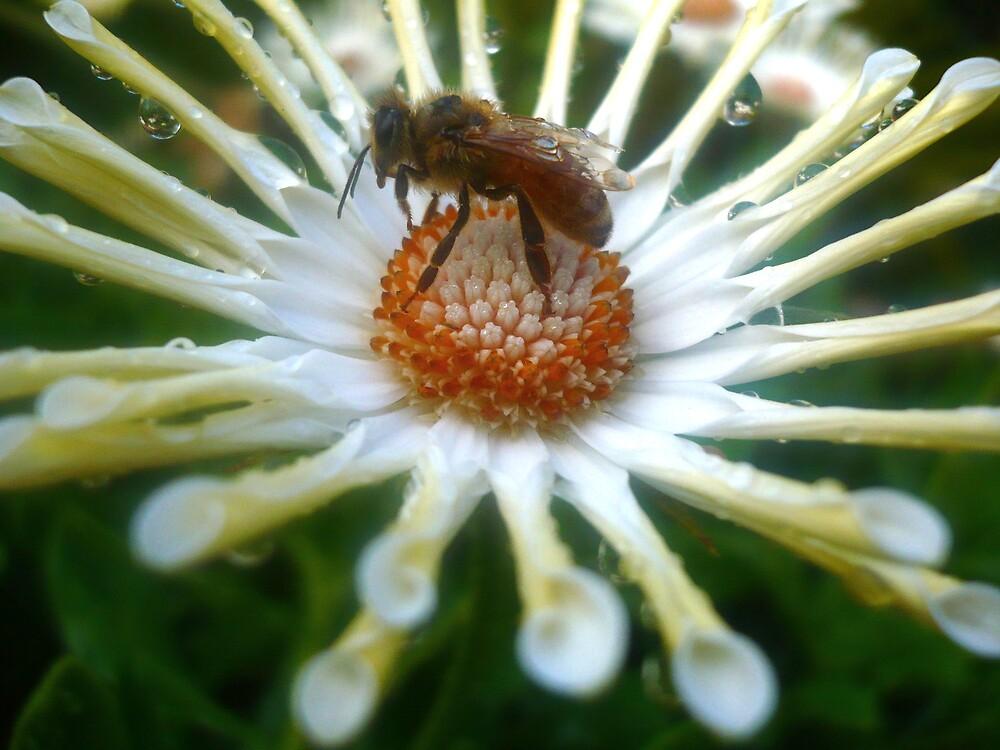 Wasp on a Flower by greeneyedgirl