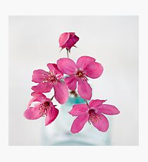 April Showers Brings May Flowers Photographic Print