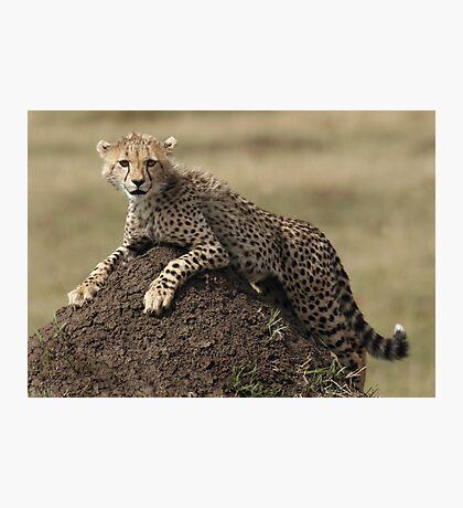 Cheetah Cub Photographic Print