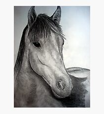a horse of course Photographic Print