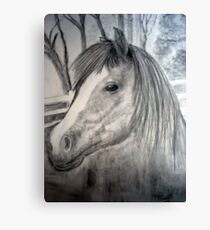 in the padock Canvas Print