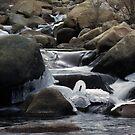 Ice Swan by Jill Doyle