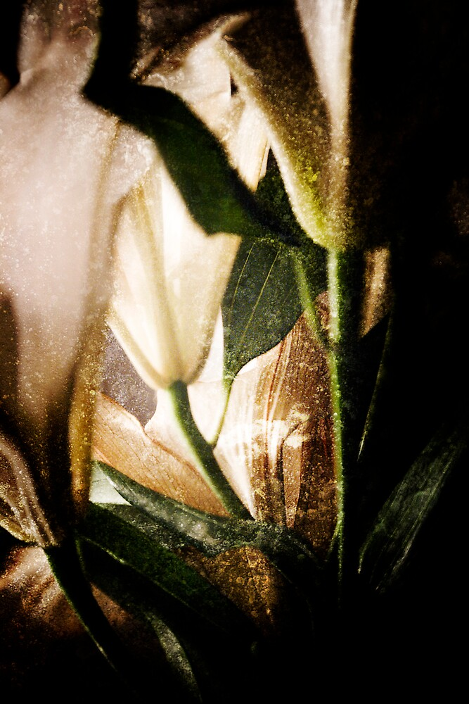 Light Shafts by bobovoz