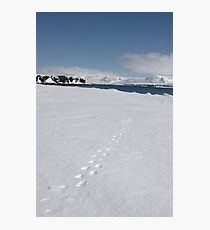 Leave Only Footprints Photographic Print
