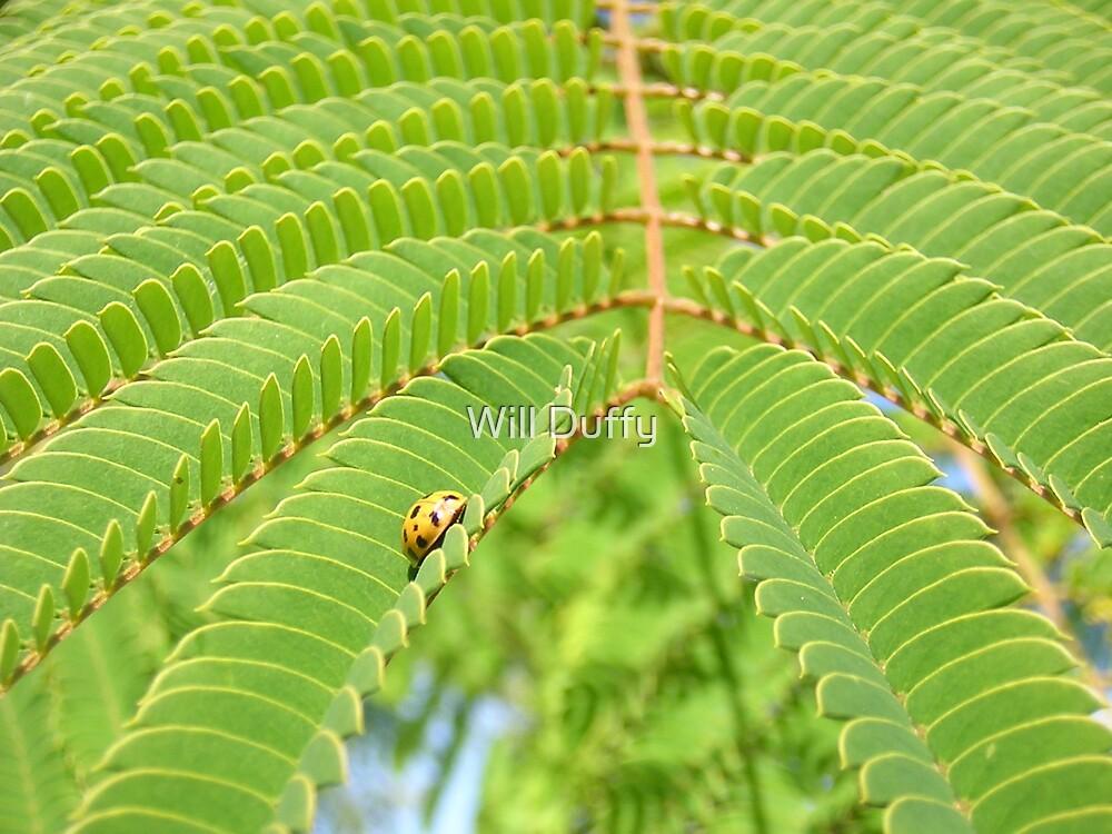 ladybug by Will Duffy