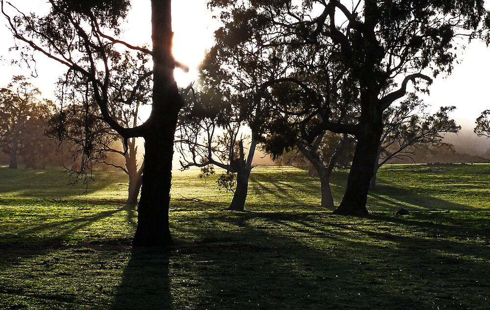 Morning Warmth by Samuel Gundry