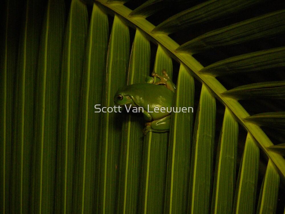 Happy Tree Frog by Scott Van Leeuwen