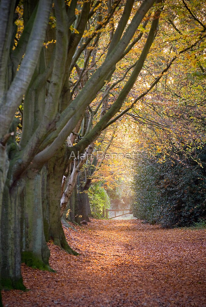 Autumn in Norwich - East Anglia by Alan Bennett