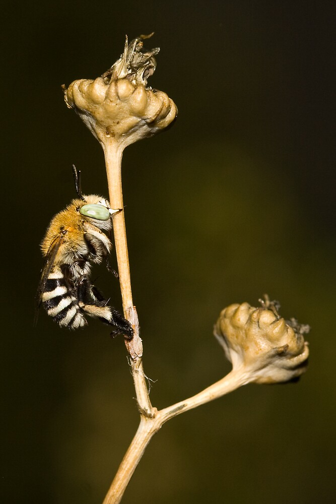 The Bee on the Branch by Rooboycoz