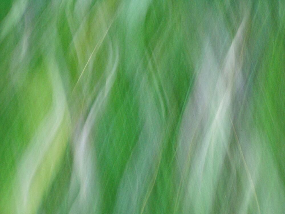 grassInLight by joelkim
