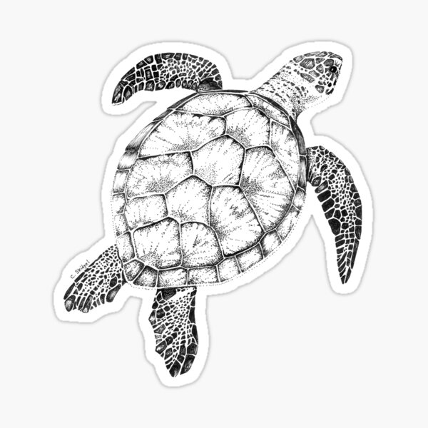 Green Sea Turtle Sticker