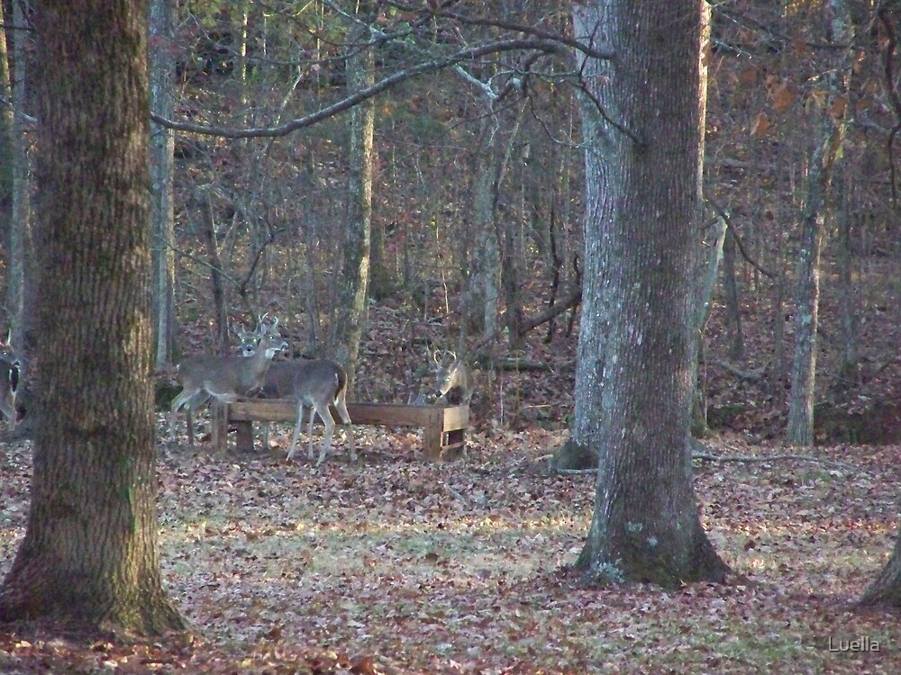Deer by Luella