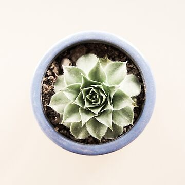 A succulent in a pot by evStyle