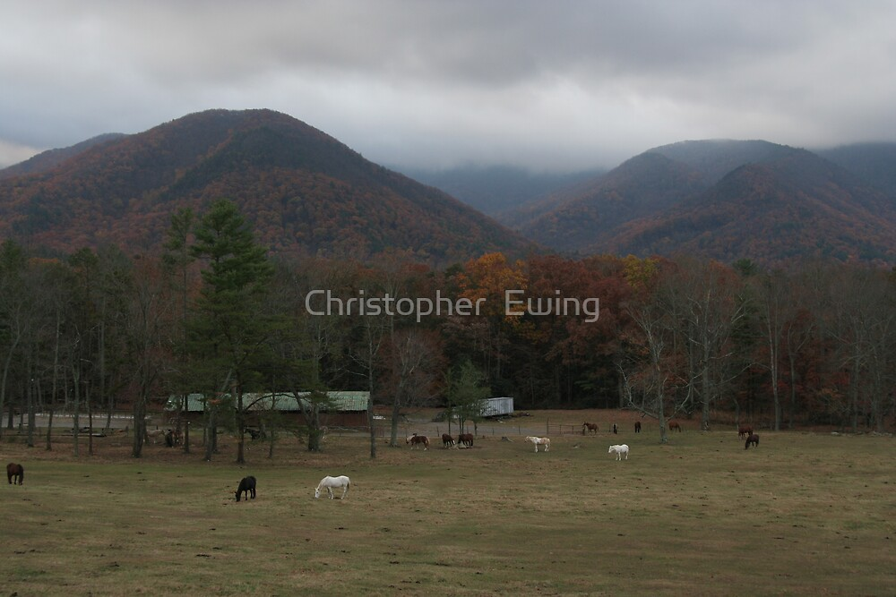 autumn graze in the fog by Christopher  Ewing