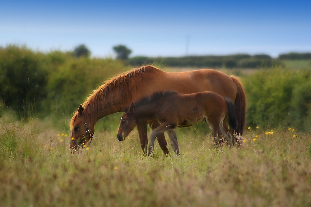 Mother and Foal by Alan Hawkins