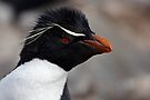 "Rockhopper Penguin ~ ""Spunky"" by Robert Elliott"