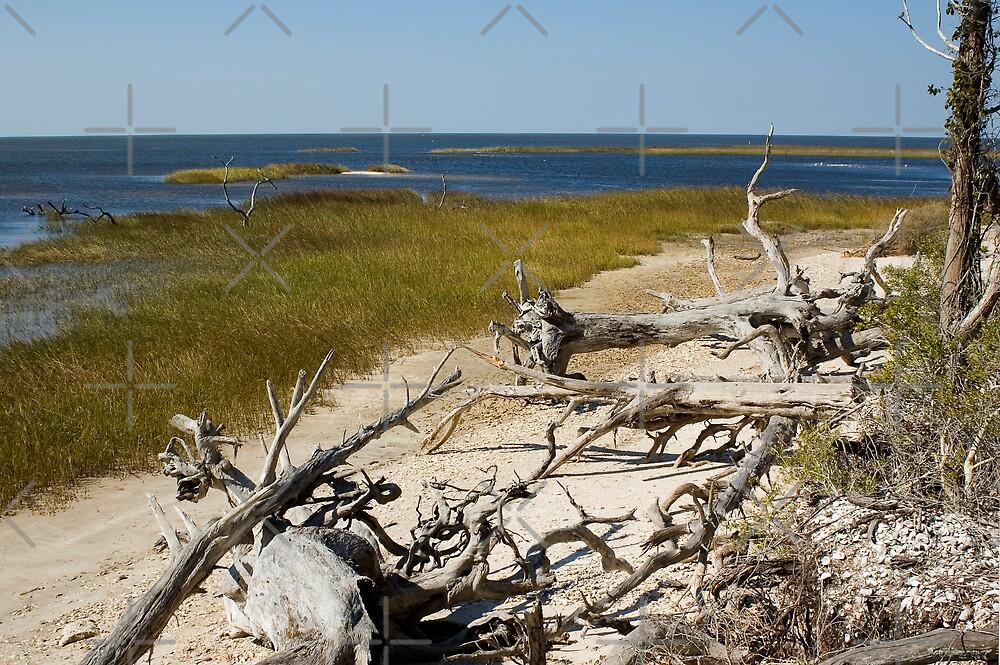 Driftwood on the Beach by Stacey Lynn Payne