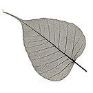 Leaf Skeleton Black by Hywel Harris