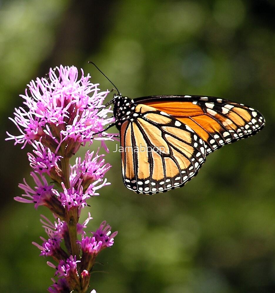 Monarch on Liatris by Jamaboop