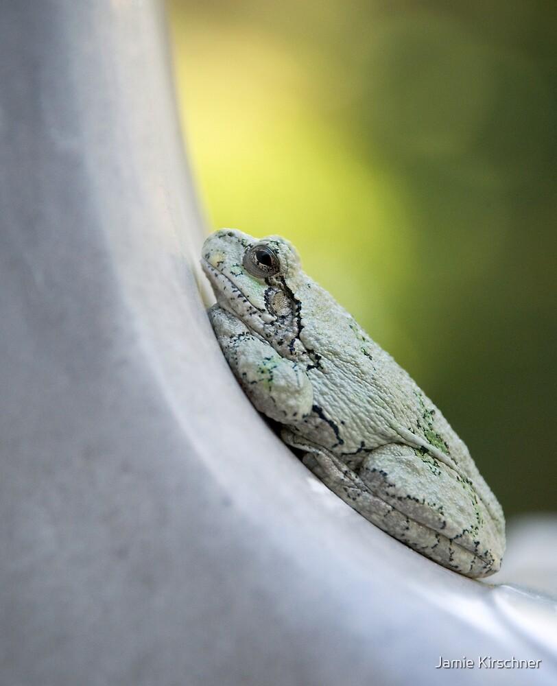 Tree Frog by Jamie Kirschner