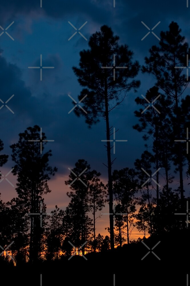 Sunset through the Pines by Stacey Lynn Payne