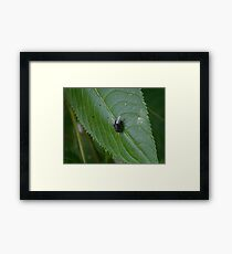 Fly on a leaf. Framed Print