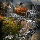 roots by Matt Mawson