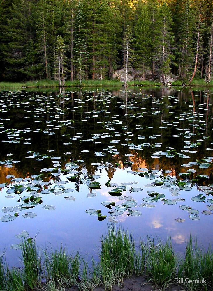 Pond by Bill Serniuk