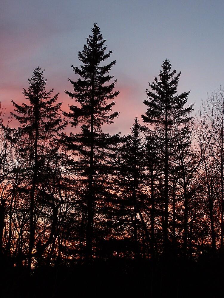 Spruce Tree Sunset by Gene Cyr