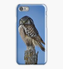 Northern Hawk Owl iPhone Case/Skin
