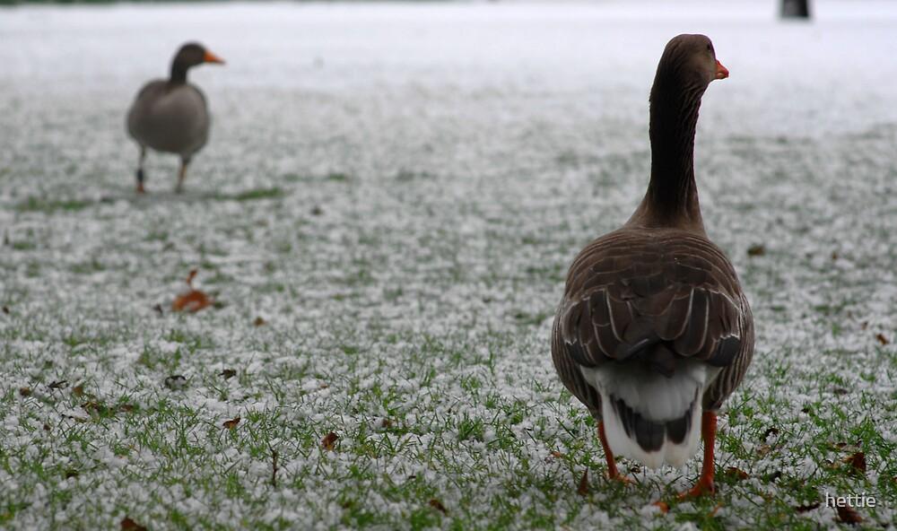 Winter geese by hettie