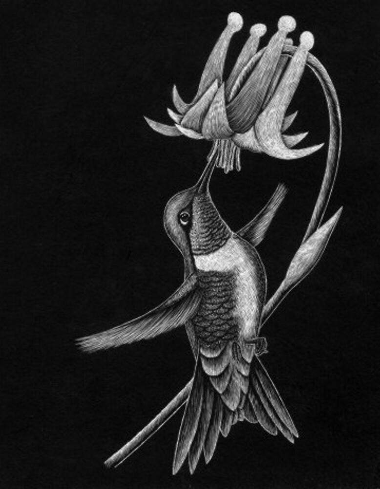 Hummingbird by John Houle