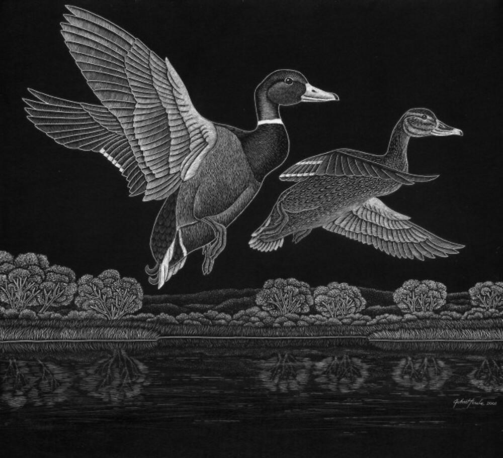Ducks by John Houle