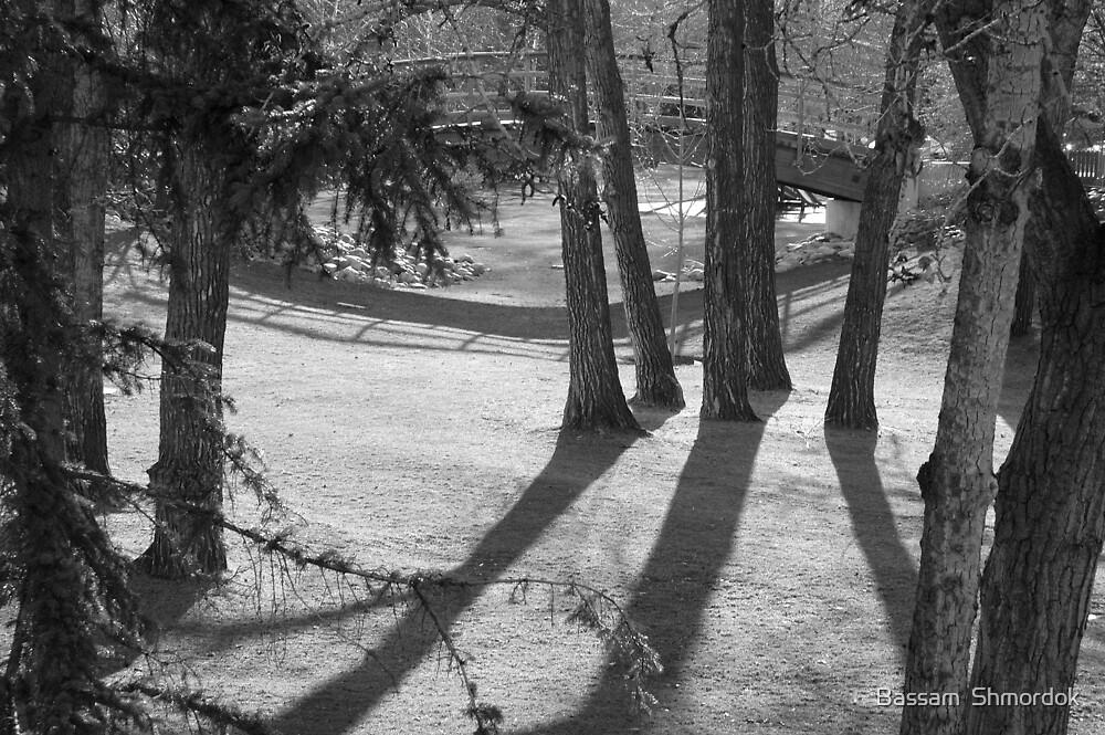 Princes Island Park in Calgary by Bassam  Shmordok