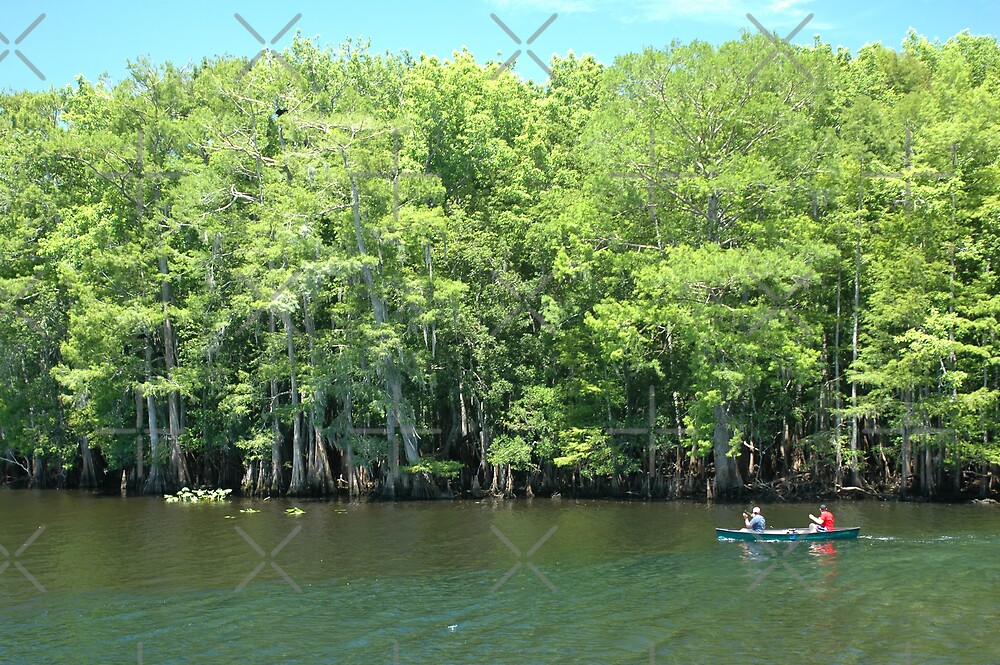 Canoeing the Suwannee River by Stacey Lynn Payne