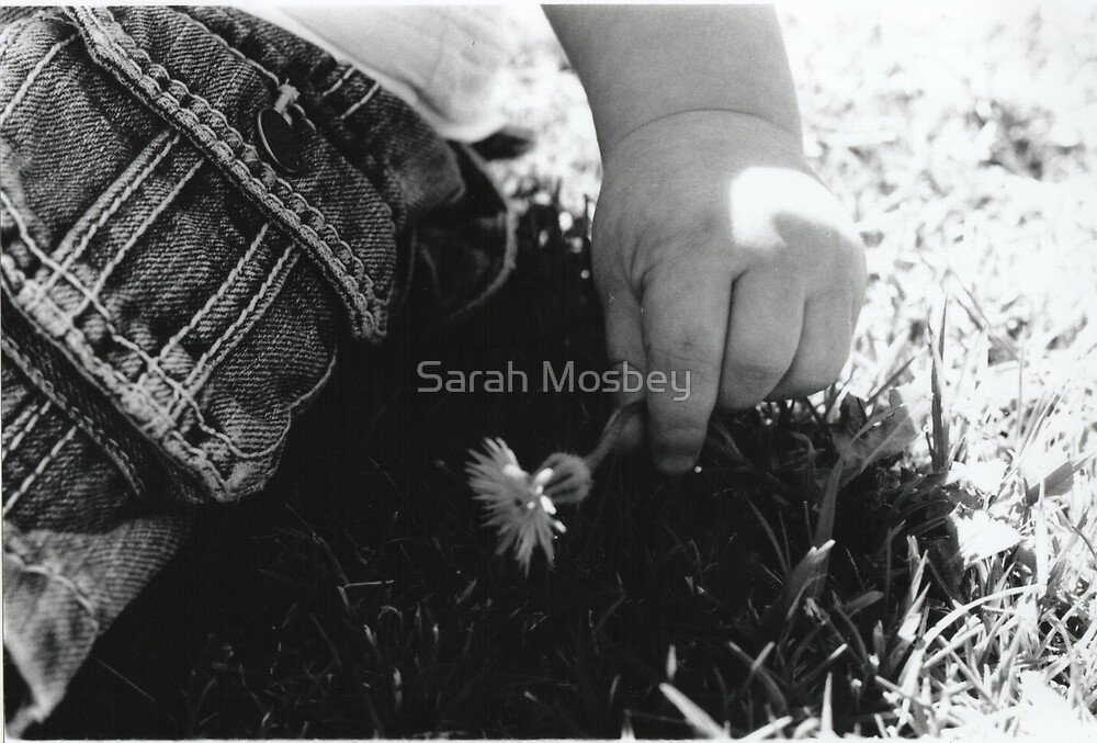 Little Flower by Sarah Mosbey