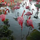 flamingo world by Bruce  Dickson