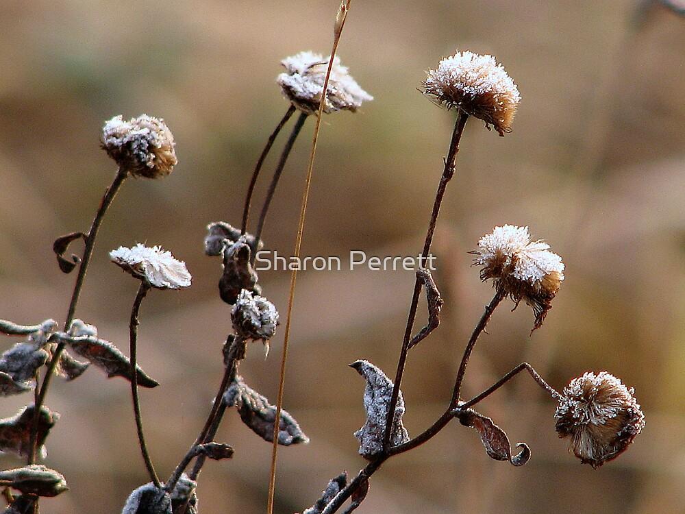 Jack Frost woz 'ere...................... by Sharon Perrett