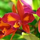 Fiery Orchids by Extraordinary Light