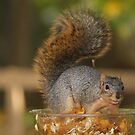 Smilin' Squirrel by Jan Cartwright