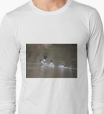 Look at the birds (Mergansers) of the air; they do not sow or reap or store away in barns, and yet your heavenly Father feeds them. Are you not much more valuable than they? T-Shirt