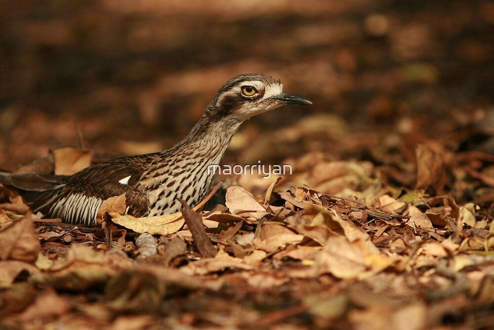 Nesting Bird by maorriyan