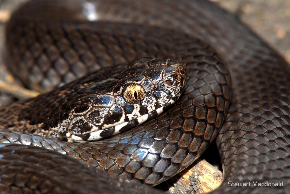 Ornamental snake by Stewart Macdonald