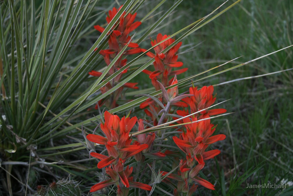 Yuca and Indian Paint Brush by JamesMichael